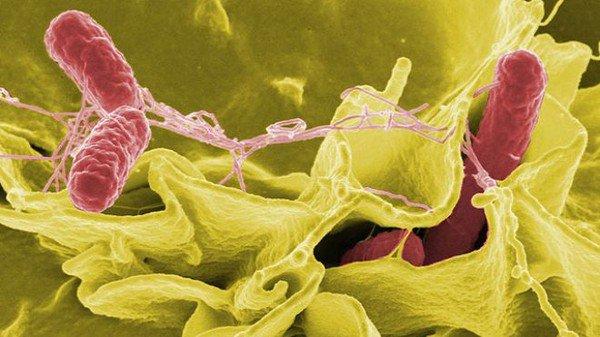 5 loài vi khuẩn đáng sợ trên bàn tay bạn