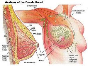 Các tổn thương ngực